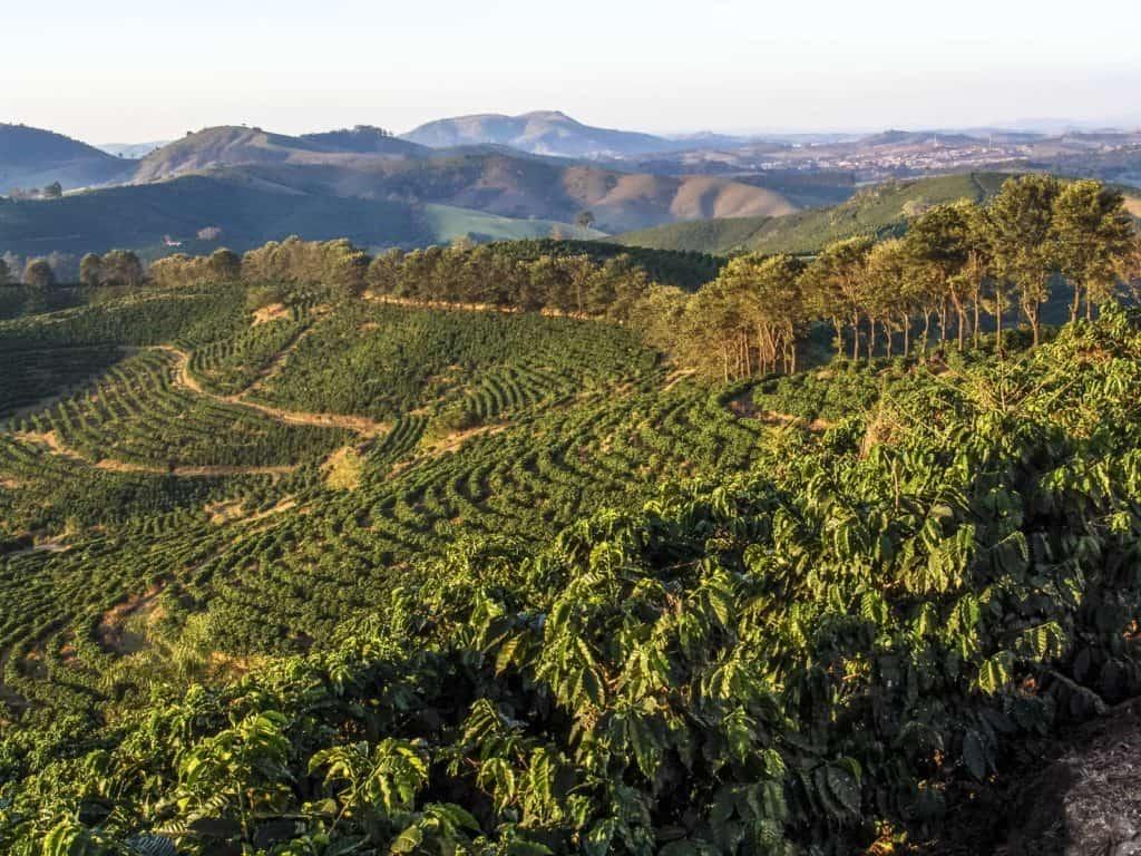 south America coffee plantation